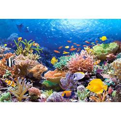 101511.Puzzle 1000 Kalad korallrifil